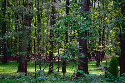 Photograph - Summer Forest by Paulette B Wright