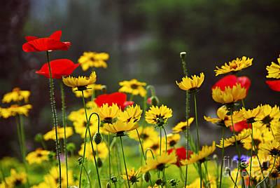 Reaching Photograph - Summer Garden by Elena Elisseeva
