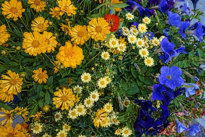 Corporate Art Photograph - Summer Garden Yellow And Blue - Photography by Ann Powell