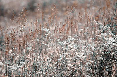 Floral Composition Photograph - Summer Grass. Nature In Alien Skin by Jenny Rainbow