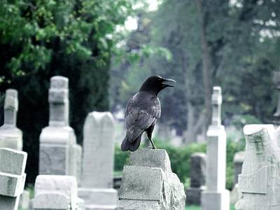 Birds In Graveyard Photograph - Summer Graveyard by Gothicrow Images