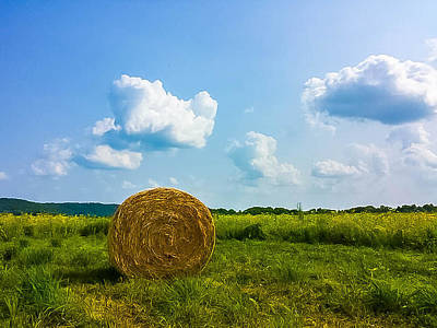 Illinois Farm Land Photograph - Summer Harvest by Martha Cordero