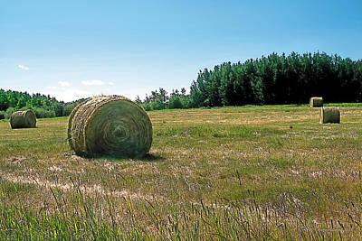 Hay Bales Painting - Summer Hay by Terry Reynoldson