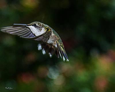 Photograph - Hummingbird - In Flight - Summer Hummer by Barry Jones