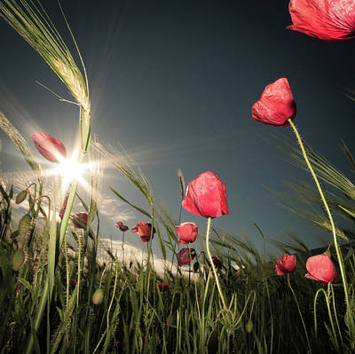 Floral Landscape Photograph - Summer Is Here by Petra Dvorak