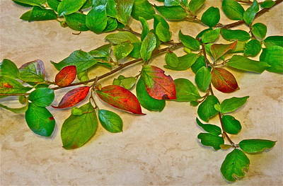 Photograph - Summer Leaves by Johanna Bruwer