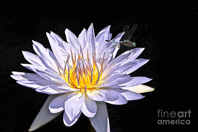 Photograph - Summer Magic -- Dragonfly On Waterlily On Black by Byron Varvarigos