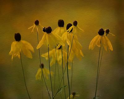 Photograph - Summer Meadow by Ann Bridges