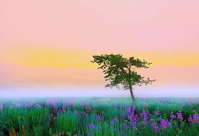 Teton Photograph - Summer Mood by Kadek Susanto