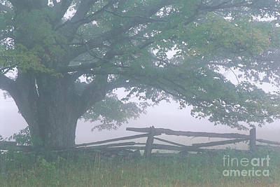 Photograph - Summer Morning Fog by Alan L Graham