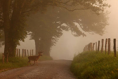 Summer Morning Stroll Art Print by Yoder Images