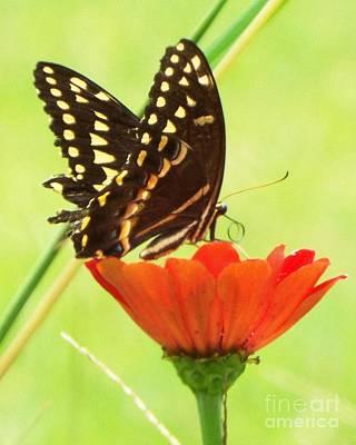 Summer Nectar I Original by Audrey Van Tassell