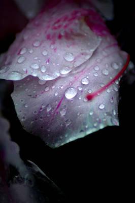 Photograph - Summer Rain In Georgia by David Weeks