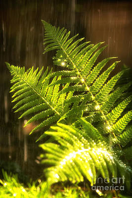 Lush Photograph - Summer Rain by Jane Rix