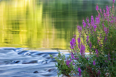 Connecticut Landscape Photograph - Summer Reflections by Bill Wakeley