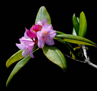 Summer Rhododendron Art Print
