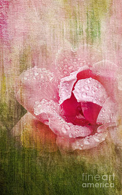 Summer Rose #2 Art Print by Betty LaRue
