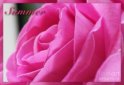 Photograph - Summer Rose by Joan-Violet Stretch