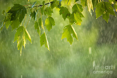 Maple Tree Photograph - Summer Shower by Diane Diederich