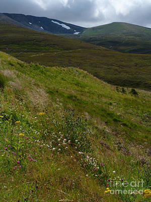 Photograph - Summer Snow Patches - Cairngorm Mountains by Phil Banks