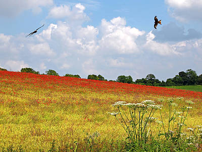 Photograph - Summer Spectacular - Red Kites Over Poppy Fields by Gill Billington