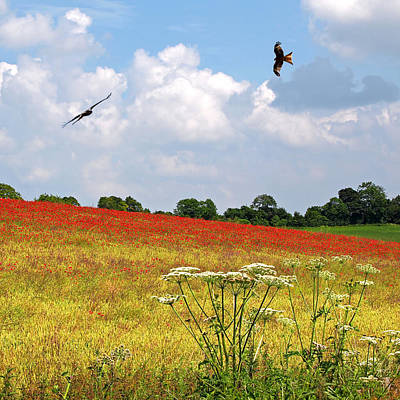 Poppy Fields Photograph - Summer Spectacular - Red Kites Over Poppy Fields - Square by Gill Billington