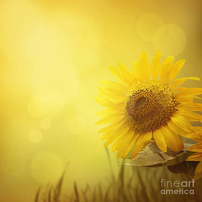 Copy Space Mixed Media - Summer Sunflower Background by Mythja  Photography