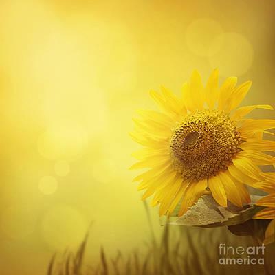 Summer Sunflower Background Art Print
