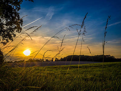 Bear Photography - Summer Sunset by Mark Llewellyn