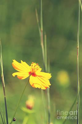 Photograph - Summer Sunshine by Jackie Farnsworth