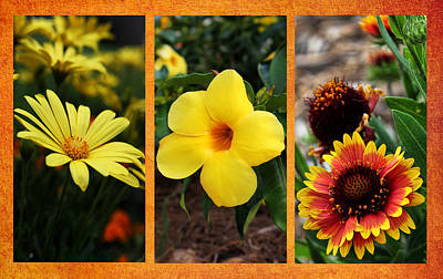 Photograph - Summer Sunshine Triptych by Judy Vincent