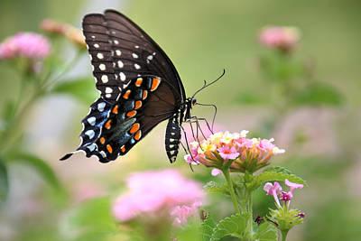 Summer Swallowtail Art Print