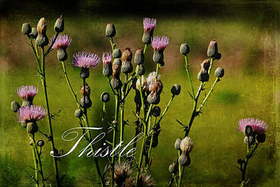 Photograph - Summer Thistles 2 by HH Photography of Florida