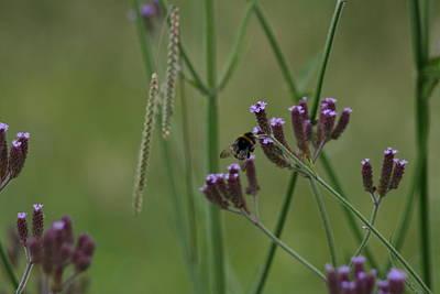 Photograph - Summer Time Buzz by Phoenix De Vries