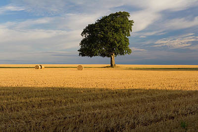 Bale Photograph - Summer Tree And Stubble by Peter Adams