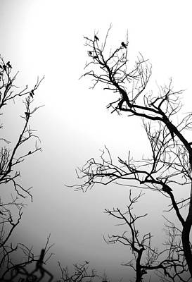 Photograph - Summer Trees 1 by Sumit Mehndiratta