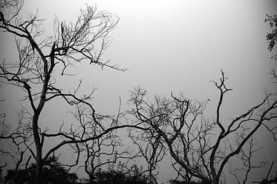 Photograph - Summer Trees 2 by Sumit Mehndiratta