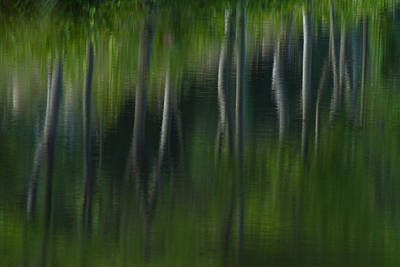 Impressionism Photos - Summer Trees by Karol Livote