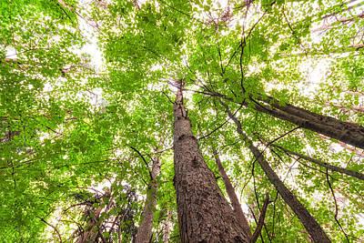 Photograph - Summer Trees by Lars Lentz