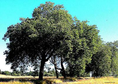 Summer Trees Art Print