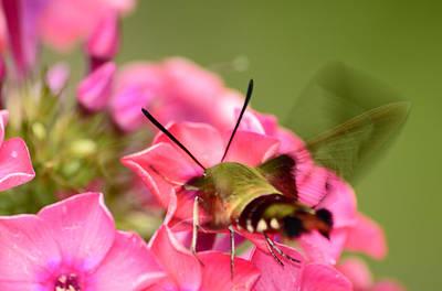 Photograph - Summer Visitor by Lori Tambakis