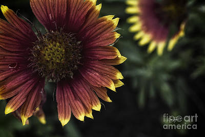 Photograph - Summer Warmth by Cris Hayes