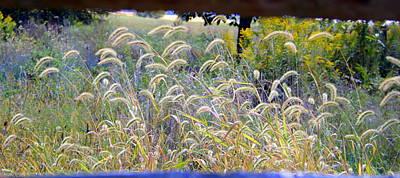 Summer Wheat Art Print