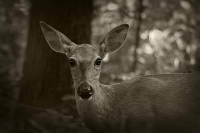 Photograph - Summer Whitetail 3 by Scott Hovind