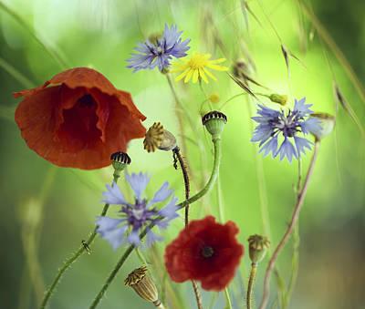Summer Wildflower Color Art Print by Dirk Ercken