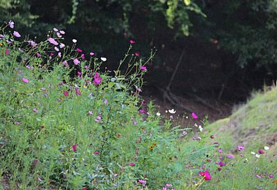 Summer Wildflowers IIi Original by Suzanne Gaff