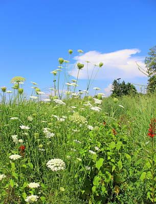 Photograph - Summer Wildflowers by Kume Bryant