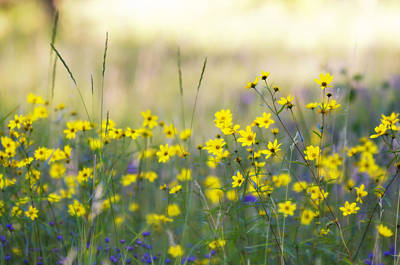 Photograph - Summer Wildflowers On The Rim  by Saija  Lehtonen