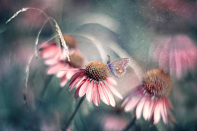 Flower Photograph - Summer Wonderland by Magda  Bognar