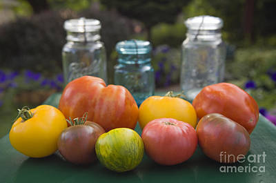 Photograph - Summer's Bounty - D009107 by Daniel Dempster